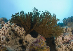 Sea fan. Galapagos. D200, 16mm. by Derek Haslam 